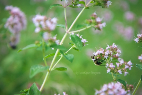 IMG_8780 bees.sleep2_smw