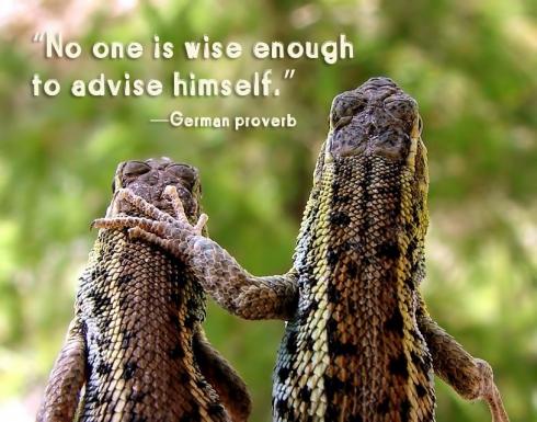 800808_76350081.lizard.friends_qt