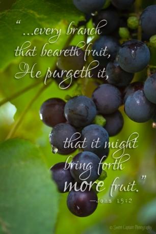 IMG_9507 grapes.John152_smw