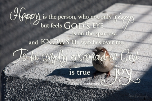 IMG_2399 sparrow.quote