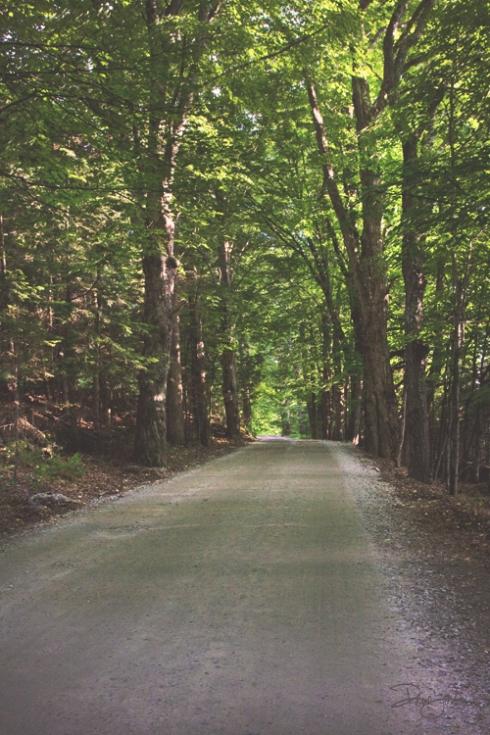 IMG_4906 tree-lined.road.vntg_smw