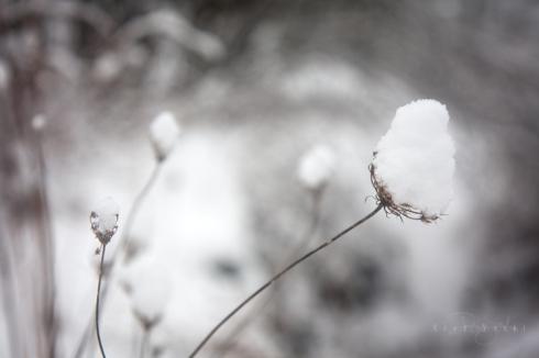 IMG_5957 QueenAnne.snow2_smw