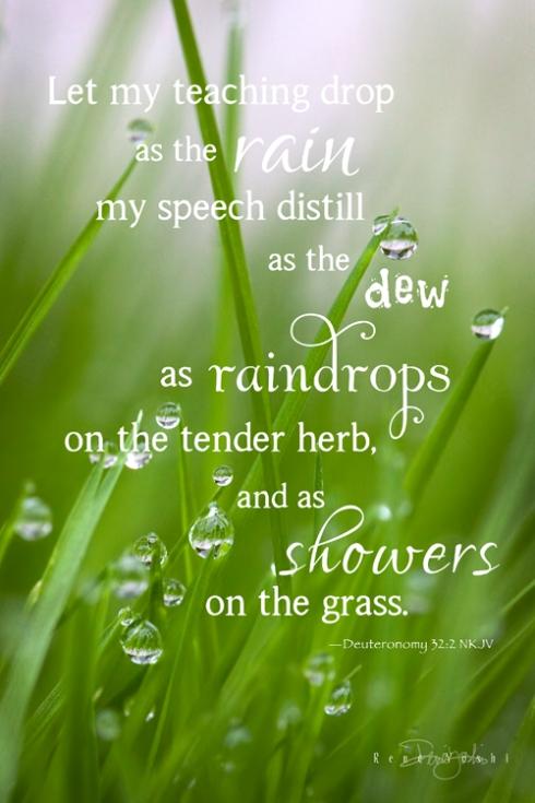 IMG_6780 raindrops.grass.dt322_smw