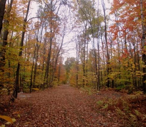 autumn.path